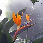 Bird of Paradise 1 by Dennis  Stanton