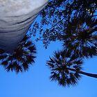 Livistonia palm canopy at Wuggubun Gorge by mickmci
