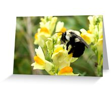 WILD SNAPDRAGONS Greeting Card