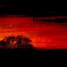 Darkness Falls by Jenny Ryan