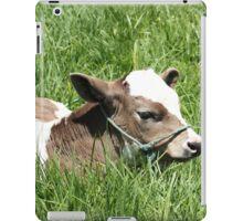 Calf Lying in a Pasture iPad Case/Skin