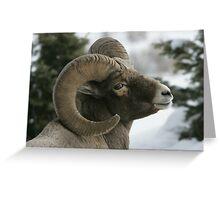 Ram's Pose Greeting Card