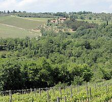 Soar the Tuscan Fields by Sheri Greenberg