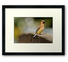 What's That Buzz? Framed Print