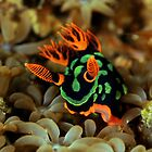 Nembrotha Nudibranch by daveharasti