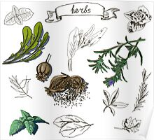 illustration set with hand drawn herbs Poster