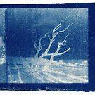 Injidup Beach Blue by Jules Campbell