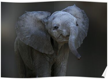 DUMBO by Michael Sheridan