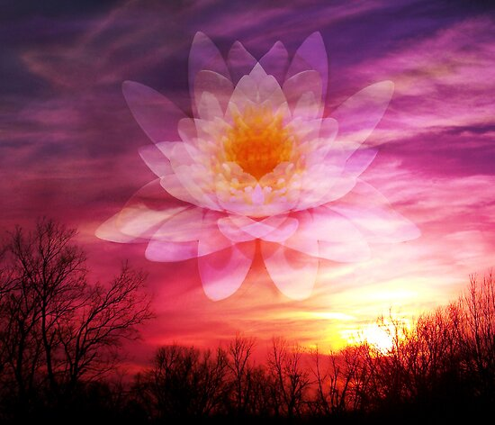 Rising Lotus Setting Sun by Elizabeth Burton