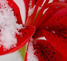 Frozen fairy dust by Anna Williams