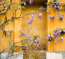 Wisteria Wall by Michael House