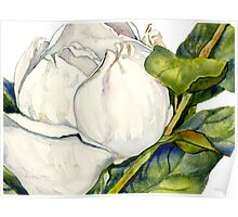 Magnolia Bloom with Leaves Poster