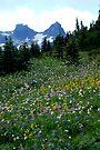 The Mountain Garden by Barbara Burkhardt