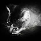 Cat in the Dark by Bine