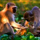 Vervet Monkeys at Play by Nicolas Raymond
