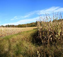 Ohio October Corn  by LeeMascarello