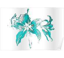 blue flower in a white background Poster