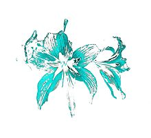 blue flower in a white background Photographic Print