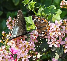 2 Butterflies by cocot101