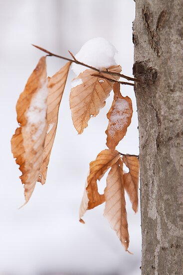 Leaves in the Snow by John Wright