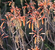 Orange Flowers by cocot101
