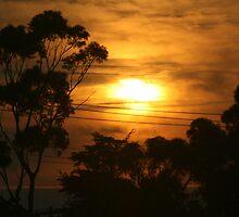 Windscreen sunrise  by Allison Sheenan