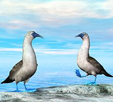 Blue-footed Booby by Walter Colvin