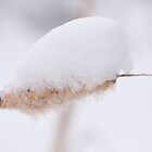 Cattail in the snow by John Wright