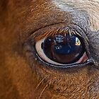 Eye of the Horse by cherylc1