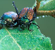 A Pair of Japanese Beetles by Bill Spengler