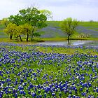 Texas Hill Country in Bloom © by Mary Campbell