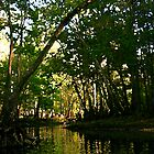 Springtime on the Hillsborough River by MMerritt