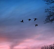 Sunset Geese by Alyce Taylor