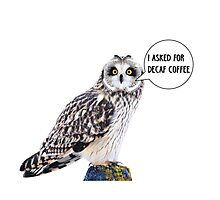 Owl and caffeine Photographic Print