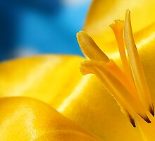 Yellow and blue Spring by Yool