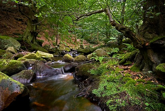 Padley Gorge by Paul Woloschuk