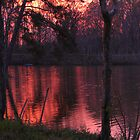 Evening Red by DottieDees
