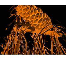 Pine Cone in the Fire Photographic Print