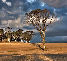 Tree of the Setting Sun by faberman