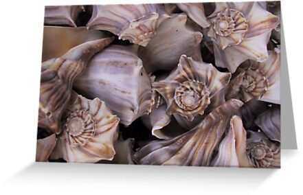 Whelks by May Lattanzio