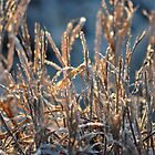 Frosted Grass by stopthat