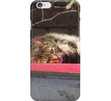 The Curious Cat iPhone Case/Skin