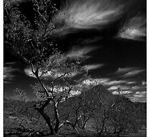Trees in Flinders-24 by jiashu xu