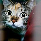 a startled cat by pmacimagery