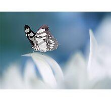 Soft blue Photographic Print