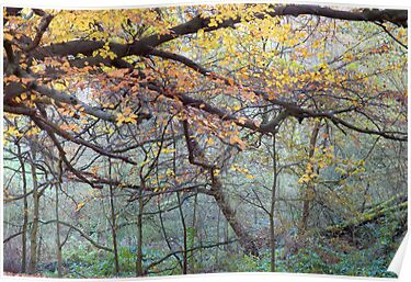 Misty Autumn Wood by Roberto Herrett