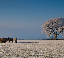 Frost in the Morning by Andy Grant
