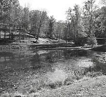 Hocking Hills Pond In B&W by LeeMascarello