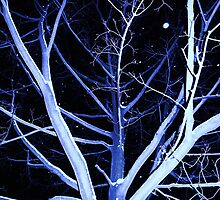 Tree In Winter Blue by Amy E. McCormick
