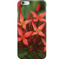 red in a sea of green iPhone Case/Skin